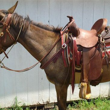 The Jones Mule Saddle