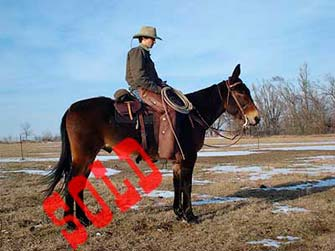 Pecos – 10 year john
