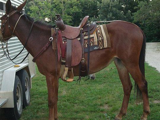 Saddle-2