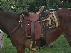 Jones Mule Rig - Saddle
