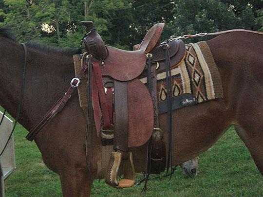 Saddle-3