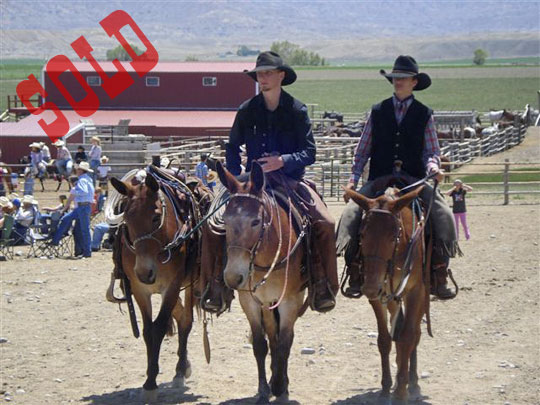 Sold-Mules-at-Jakes-2010