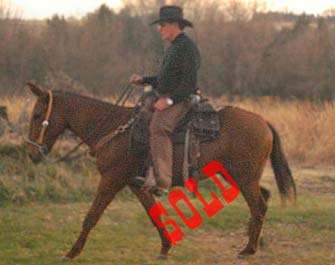 Tex – 8 year old john mule