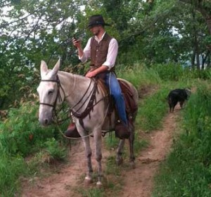 Spike – 12 year old Horse (john) Mule