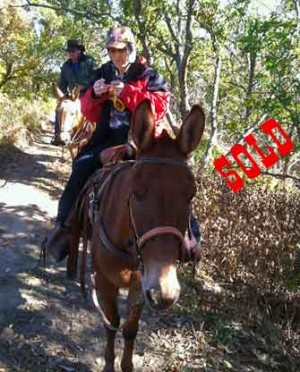 Festus – 10 year old Horse (john) Mule