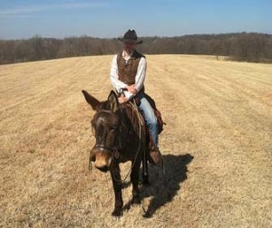 Chip – 12 year old Horse (john) Mule
