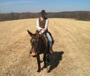 Chip – 12 year old Horse (john) Mule