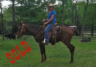 Willie – Horse (john) Mule
