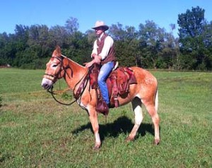 Rose – 14 year old mare (molly) mule
