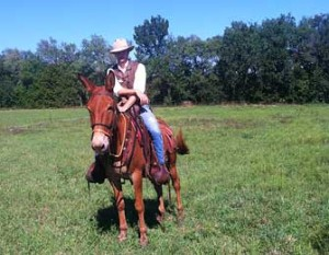 Sally – 11 year old mare (molly) mule
