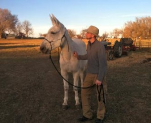Grace – 12 year old mare (molly) mule