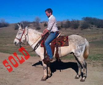 Keno – 8 year old horse (john) mule