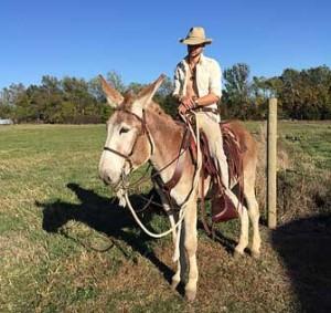 Dorito – 5 year old mare (molly) mule