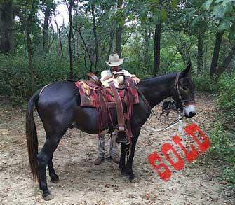 Handy – 15hd horse (john) mule