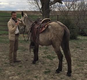 Trooper – 8 year old horse (john) mule