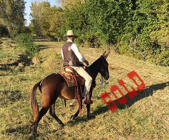 Rose – 12 year old mare (molly) mule
